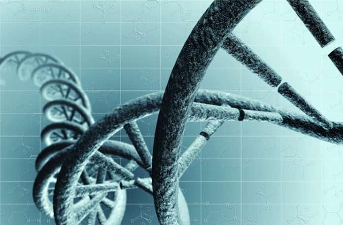 Anneden embriyoya giden genetik sinyalleri açıklamaya yardımcı olabilir