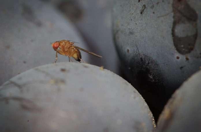 Bu küçük böcekler şaşırtıcı derecede parlak ve çok hızlılar