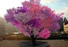 Bilim adamları 40 farklı meyve veren ağaç üretti