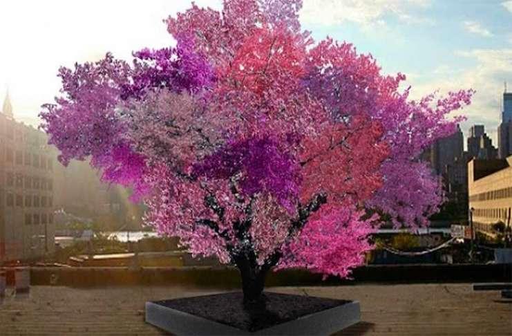 Bu ağaç 40 çeşit meyve veriyor