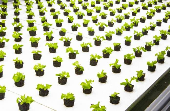 Firma gıda sıkıntısına alternatif çare olmayı planlıyor