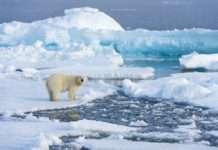 İklim değişikliği Kuzey Buz Denizi'ndeki asitlenmeyi tetikliyor