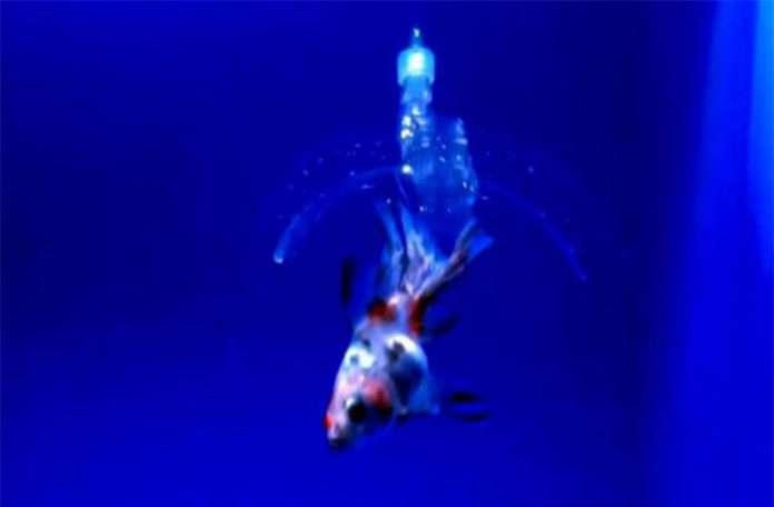 Saydam jelden üretilen robotlar suyun içerisinde gezebiliyor