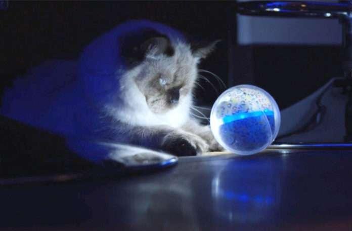 Pebby ile evcil hayvanınızla dilediğiniz yerde oynayabilir ve iletişime geçebilirsiniz