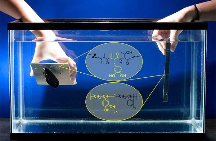 Midyelerden ilham alınarak su altında çalışan sentetik bir yapıştırıcı geliştirildi