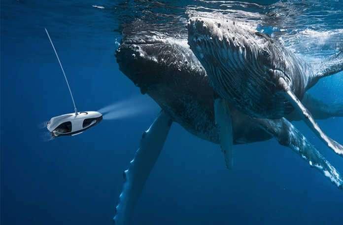 Su altı drone'u PowerRay ile video çekin ya da balıkları izleyin