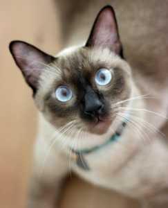 Kediler ilk kez nasıl evcilleştirildi?