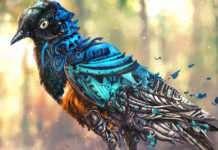 """Canadian Airport to Use Robotic Falcons to Stop Bird Strikes Kanada Havalimanı kuş çarpmalarını durdurmak için robotik falkonları kullanacak Kanada'nın Edmonton Uluslararası Havaalanı, küçük kuşları havaalanından uzak tutmak için robotik şahinler kullanacağını açıkladı. Bu uygulama ile kuşların havaanlarında yuvalanmasını ve uçaklara çarparak ölmelerinin engellenmesi amaçlanıyor. O bir kuş mu? Yoksa bir uçak mı? Aslında birazcık ikisinden de... Hollanda merkezli Clear Flight Solutions tarafından üretilen drone kuşları, detaylı bir tüy taraması ve kanatları ile gerçek bir şahini taklit ediyor.Havalimanı pistlerinin yanında sekiz sekiz bordürle uçarak, eğitimli pilotlar tarafından uzaktan kumanda ediliyor olacaklar. Clear Flight Solutions'ın bir araştırma ve geliştirme mühendisi olan Wessel Straatman, """"Saldırı ve davranış yoluyla doğal muadilleriyle taklit ederek, gerçek hayattaki av kuşlarından ayırt edilemez şekilde tasarlandılar"""" dedi. Digital Trends ise, """"Kuşların içgüdüsel olarak tepki göstererek, bu bölgeye gelmeleri daha cazip hale geliyor"""" dedi. Havalimanı yetkilileri, yeni araç filosunun Edmonton'u kuşlar ve uçaklar için daha güvenli hale getirmesi için çalıştıklarını bildirdi. Kuş çarpmaları havacılık dünyasında büyük bir sorundur; FAA, 2011'den 2015'e kadar 56.000'den fazla olayı bildirildi. Küçük uçaklar için, kuşların saldırıları, özellikle de pencerelerine ciddi hasar verebilir. Kuşlar türbinlerinden emilirlerse, daha büyük yolcu jetlerinin motorlarında arızalar meydana gelebilir. Keza pek çok uçak kazasının bu şekilde gerçekleştiğini biliyoruz. Edmonton, şimdilik robotik şahinlerini ne zaman uygulamaya koyacaklarını açıklamadı, ancak yetkililer, konuşlandırıldıktan sonra, hava limanlarının günlük operasyonlarının bir parçası haline geleceklerini belirtti."""