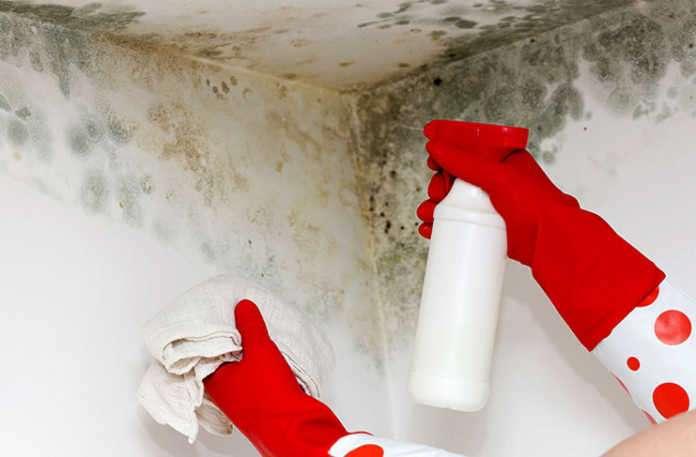 Mikotoksin olarak da bilinen mantar toksinleri, kapalı hava kirliliği kaynağı