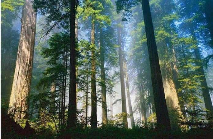 Orman banyosu ruhunuzu tazelemenin yeni yolu