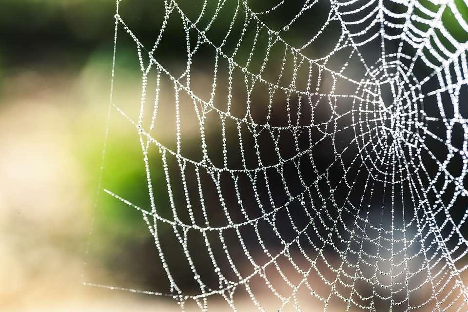İpek örümcek ağı tedavisi sinir sistemi rahatsızlıklarına umut ışığı yaktı